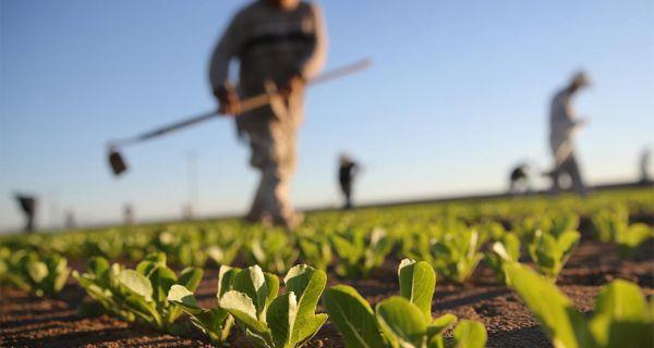 Pšenicu ugrožava nedostatak vlage u zemlji, rane kajsije i trešnje uništio mraz