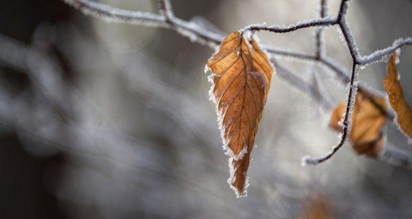 Sutra ujutro slab mraz, tokom dana pretežno sunčano i toplije
