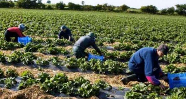 Prijavljeno 25.600 sezonskih radnika