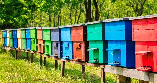 Субвенције пчеларима: 720 динара по кошници