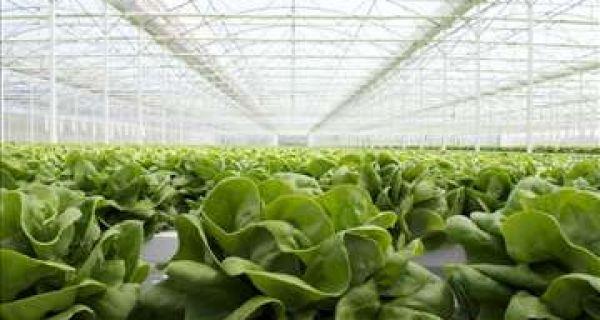 Tokom zime neophodna zaštita biljaka u plastenicima