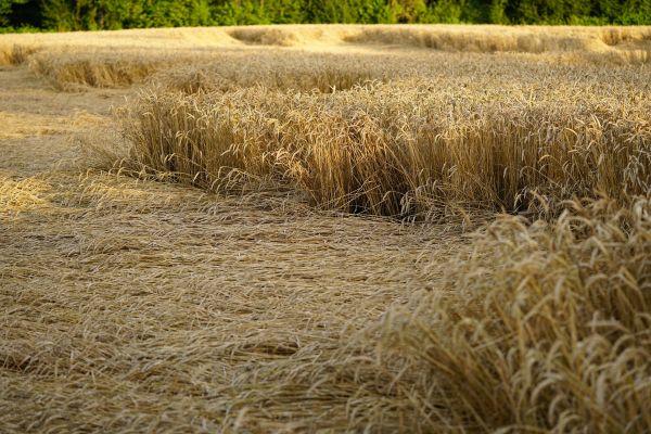 ДДОР убрзава исплату штете пољопривредницима у Србији