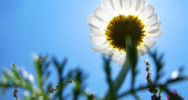 Sutra pretežno sunčano i toplo