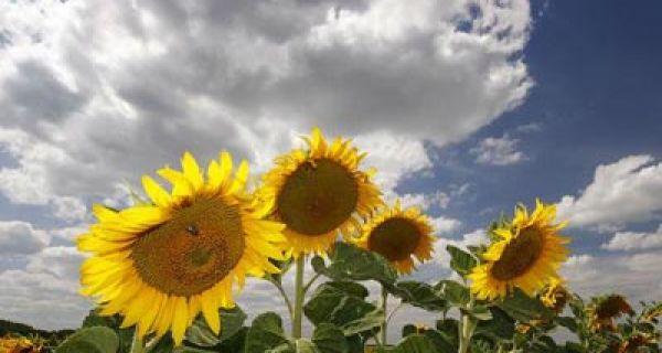 Danas toplo i sunčano, popodne pljuskovi