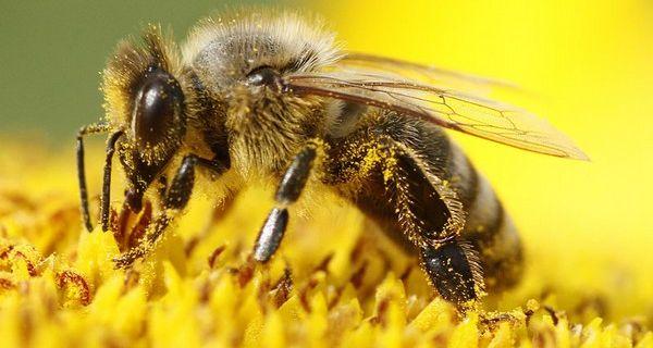 Deklaracija protiv trovanja pčela