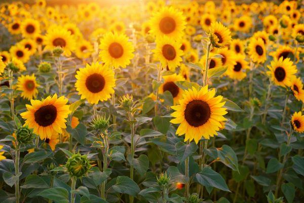 Сутра сунчано и топло, температура до 30 степени