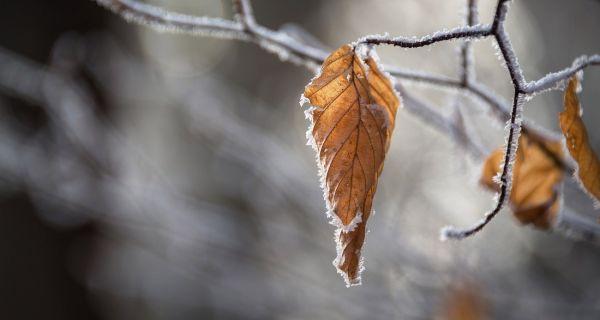 Сутра ујутро слаб мраз и местимично магла, током дана облачно и суво
