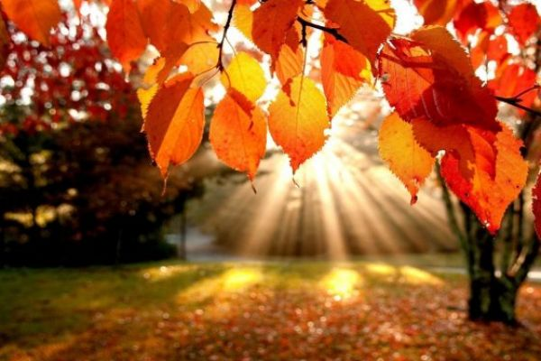U Srbiji sutra jutarnji mraz, tokom dana pretežno sunčano