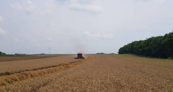 Mačvanski žeteoci nezadovoljni cenom pšenice